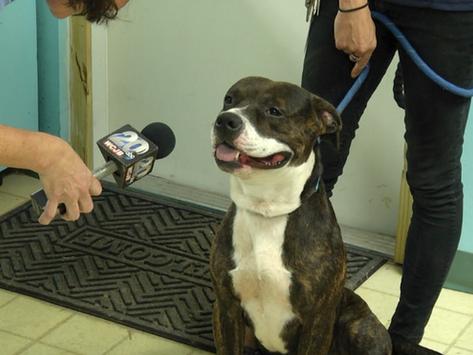 Lake City Humane Society Raises Money for Rescue Dog's Hip Surgery