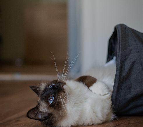 Adopting - Cat.jpg