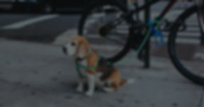 Home Pet Ordinances BG.jpg