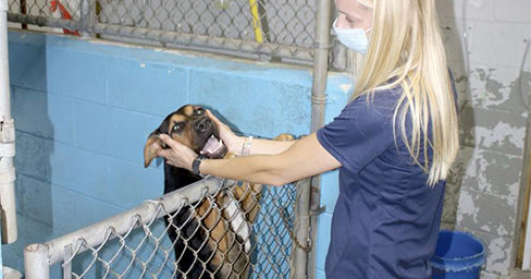 Humane Society Looking to Raise Funds fo