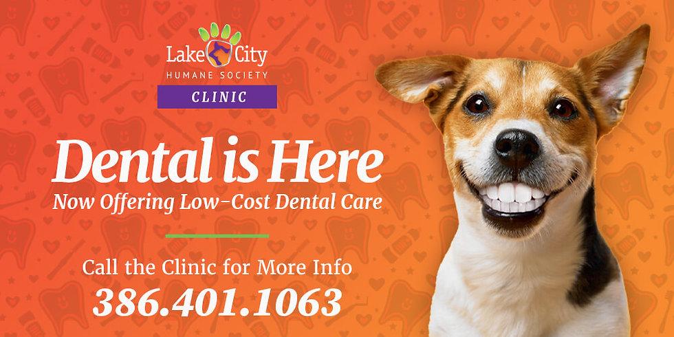 Website Hero - Dental Is Here.jpg