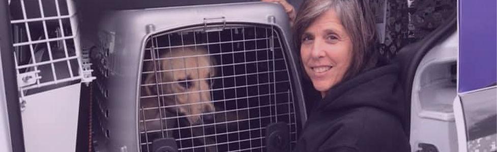 Animal Services FAQs Hero.jpg