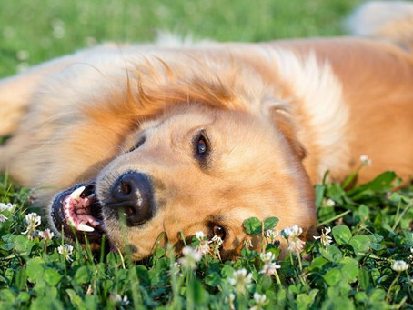 Four Spring Season Health Tips for Your Pets