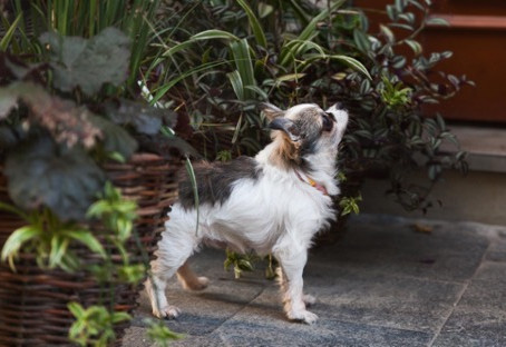 House Plants Toxic to Dogs