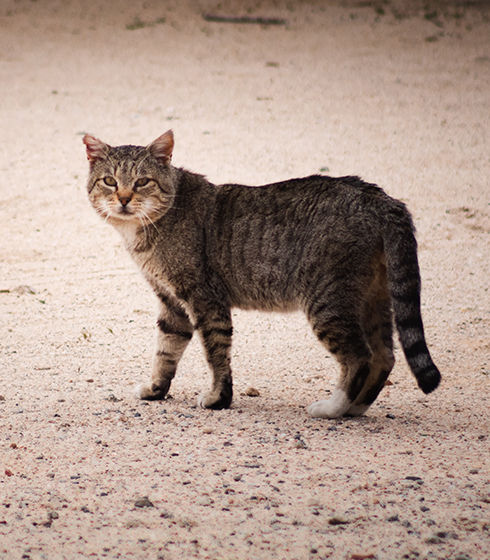 Community Cat Image.jpg