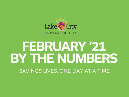 February '21 by the Numbers