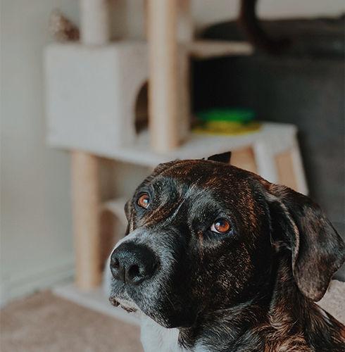 Adopting - Dog.jpg