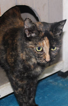 Donate - Spay Neuter Clinic Cat.jpg
