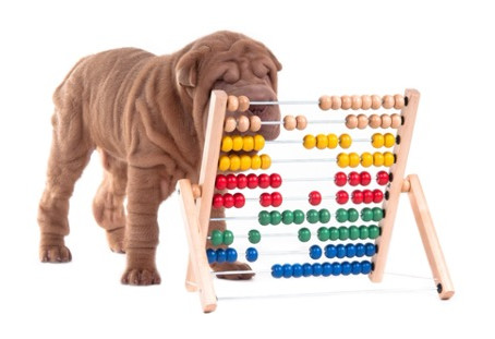 Fact vs. Fiction: How to Calculate Dog Years