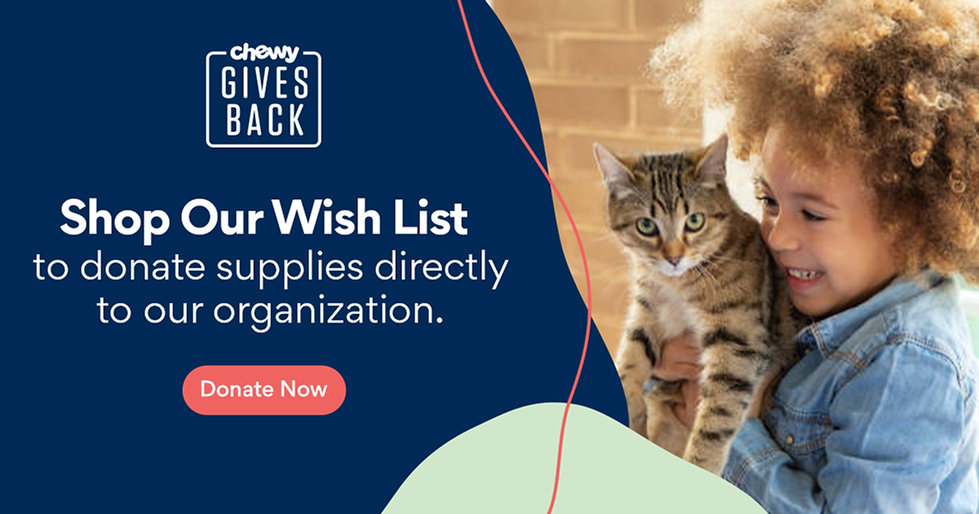 chewy-gives-back-cat-1200x630.jpg