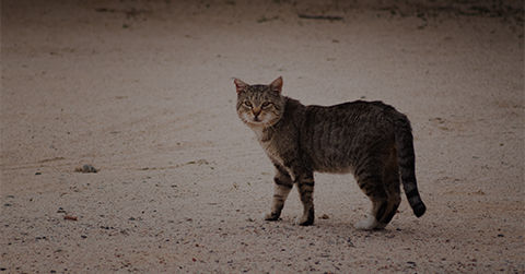 Clinic - Community Cat Program.jpg