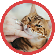 Helping Your Animals Icon.png