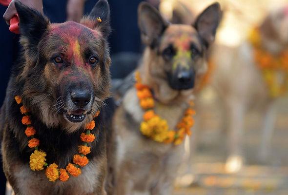 Dogs with garland, Kukur Tihar
