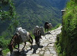 Ponies carrying a load, walking up path in Annpurna region Nepal