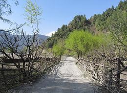 Ridng back into the tree-line in the Kali Gandaki Valley, Nepal