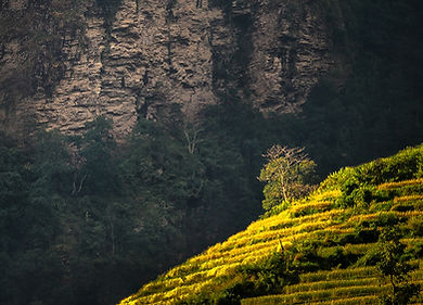 Terraced fields in sun, near Tatopani, Annapurna region, Nepal