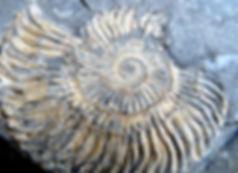 Ammonite fossil found n Upper Mustang, Nepal