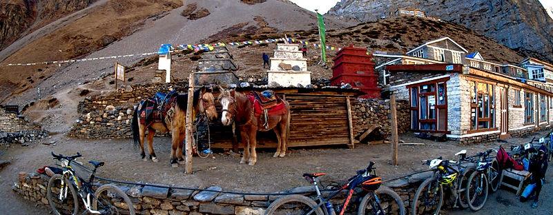 Mountain bikes an ponies in Manang, Nepal