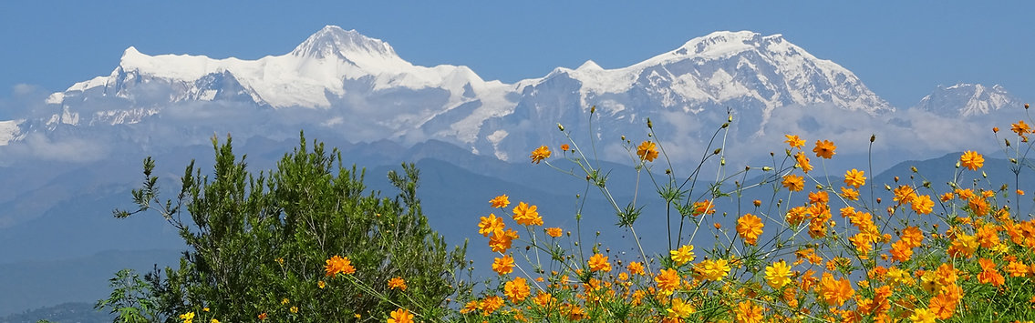 Himalayan mountains with flowers n foreground, Annapurna, Nepal