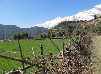 Field an trail, Annapurna, Nepal