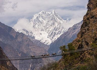 Pony train crossing suspension bridge near Tatopani, Annapurna, Nepa