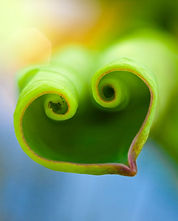 adventure-journal-hearts-in-nature-leaf-