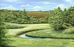 Field of mPhlox 17_ X 11_