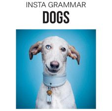INSTA DOGS BOOK