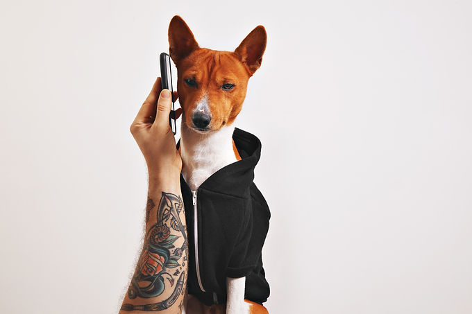 man-with-tattooed-arm-holds-up-smartphone-ear-basenji-dog-black-hoodie-isolated-black.jpg
