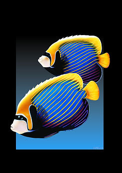 Emperor Angel Fish.jpg