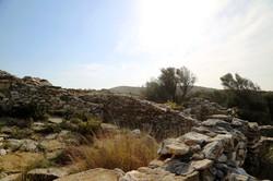 Oliv Trees path