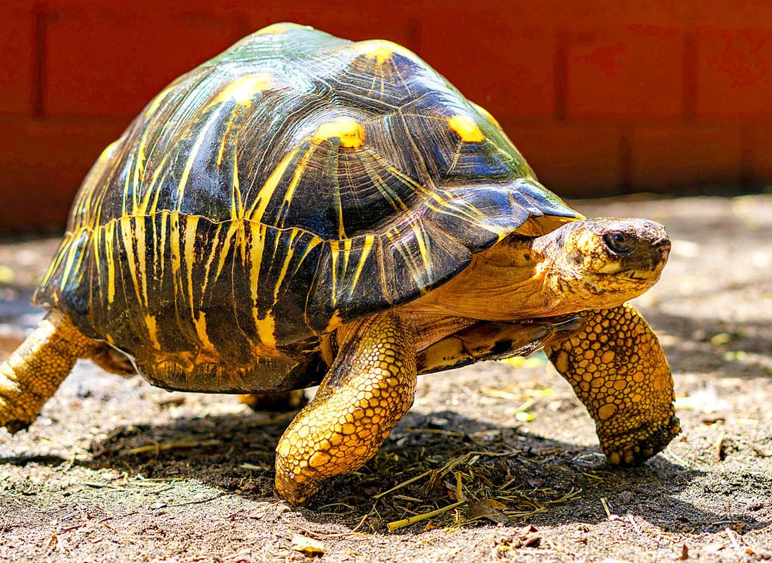 8-La-tortue.jpg