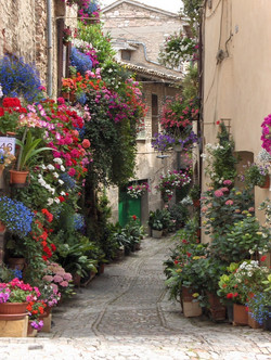 lesbos-beautiful-spring-alleys-13