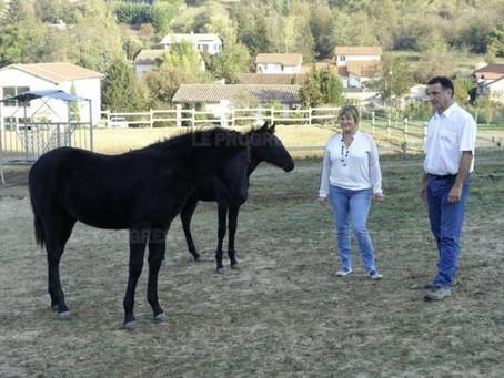 Deux éleveurs de Chaponnay passionnés par le cheval de Zorro