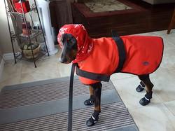 Braxton dressed for winter