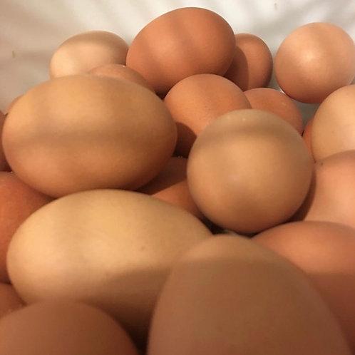 Holistic Acres 1 Dozen Free Range Brown Eggs