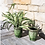 Thumbnail: PROVENCAL URN FOREST GREEN SMALL
