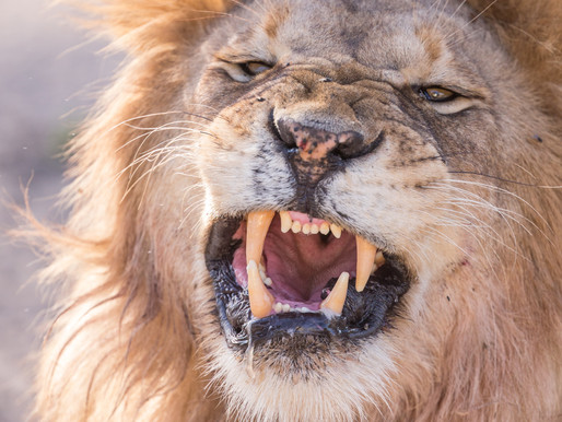 The Roar of a Fake Lion