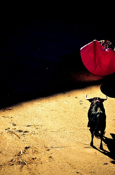 entrevista quintana derechos animales