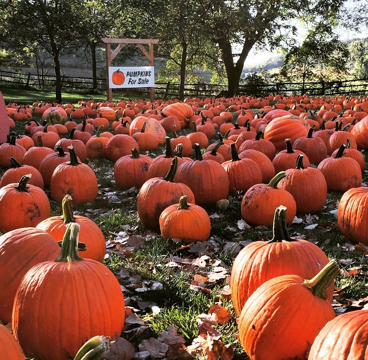 pumpkin gv.jpg