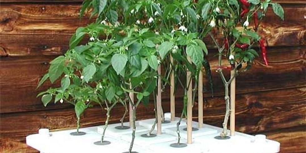 Learn Hydroponic Gardening!