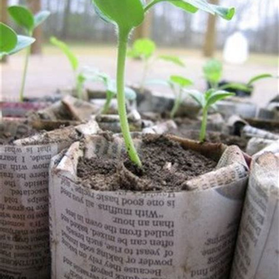 Seed Starting Using Newspaper Pots