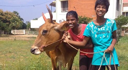 Cow Image2.jpg