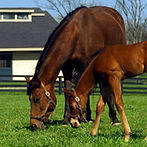 mare_and_foal_largefeature.jpg