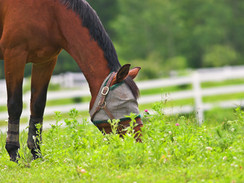 Spring Management Tips for Your Horse and Farm