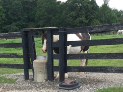 Caring for Horses in Hot Weather
