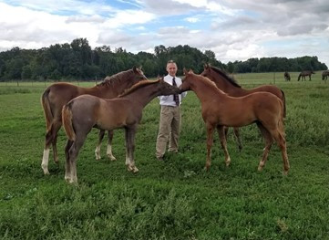 Should Horses Begin Training While They are Young and Still Growing?