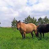 pastures.webp