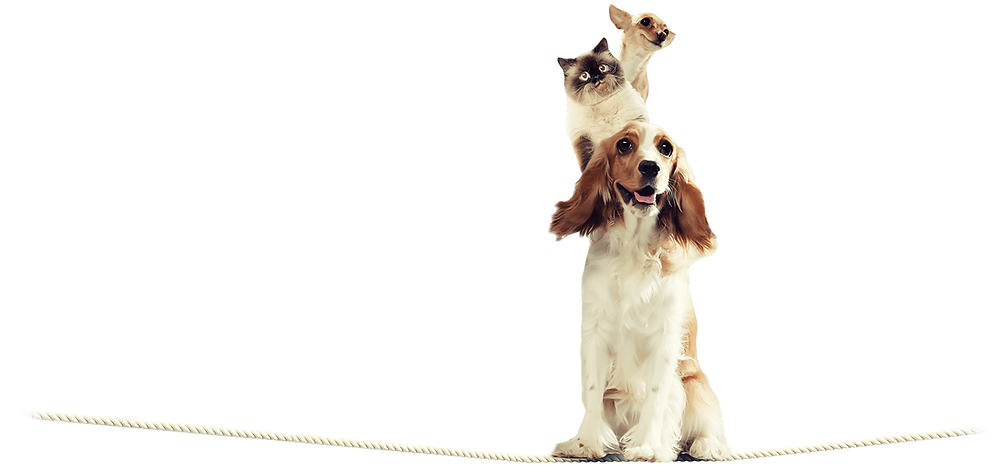 tightrope-pets.png