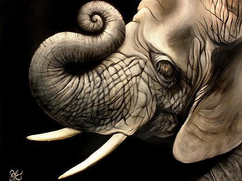 Elephant Portrait - Print
